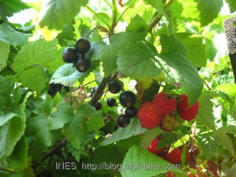 Black Current and Raspberries