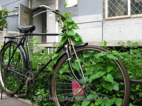 Plants Overgrowing Classic Flying Pigeon Bicycle
