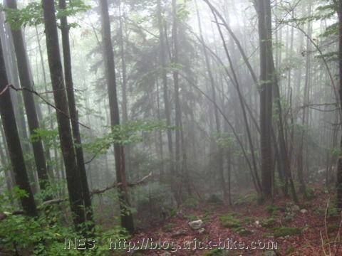 Hiking in the Foggy Forest