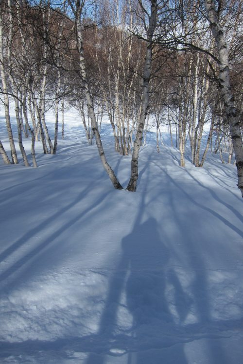 Birch Forest with Natural Snow in Genting China